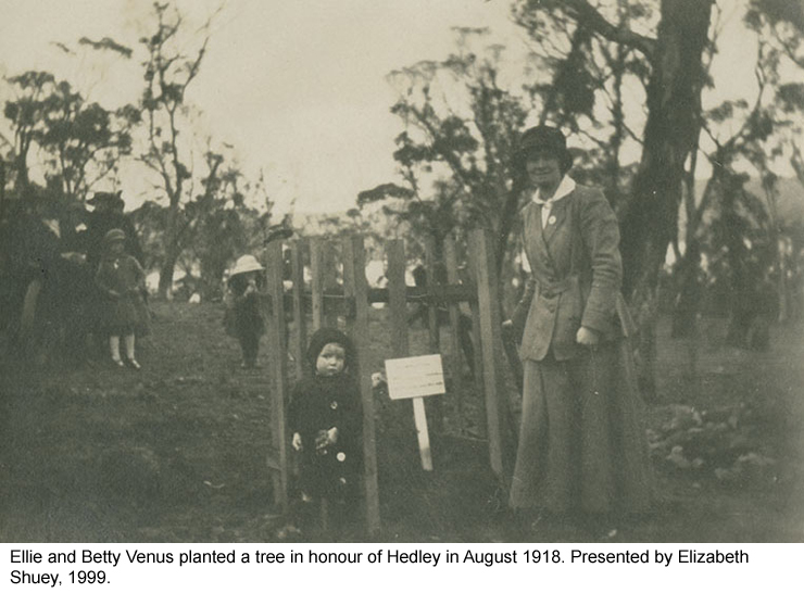 Ellie and Betty Venus planted a tree in honour of Hedley in August 1918.